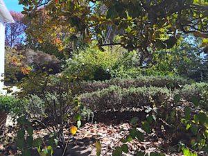 monterey-stevenson-garden