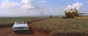 blue-hawaii-pineapple-fields