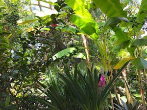 denver-botanic-garden-2