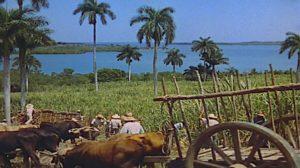 weekend-havana-sugar-cane