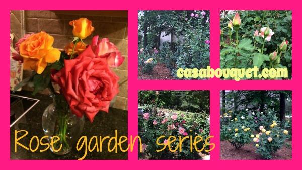 Rose garden series – planning, care, arrangement